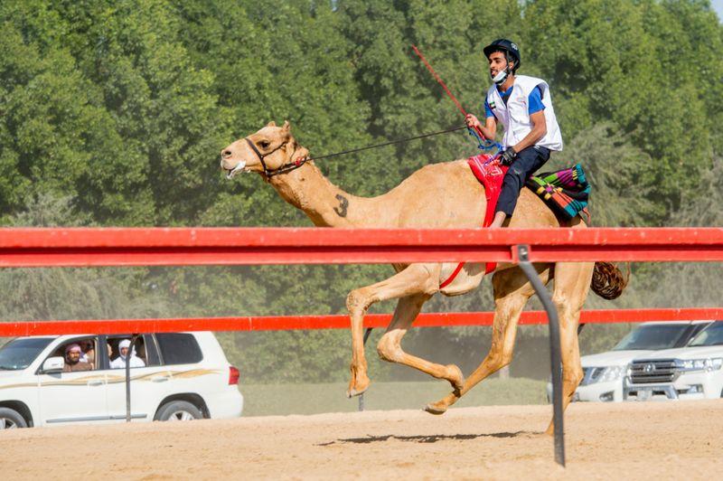CAMEL 10-1611482488411