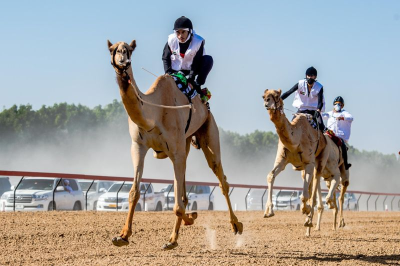 CAMEL 9-1611482485695