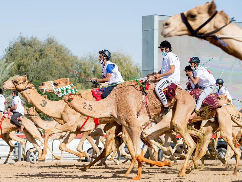 CAMEL TEASER-1611482472687
