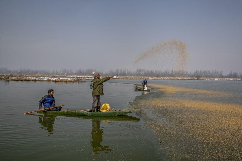 Copy of India_Kashmir_Feeding_Birds_Photo_Gallery_32504.jpg-c50b5-1612412731236