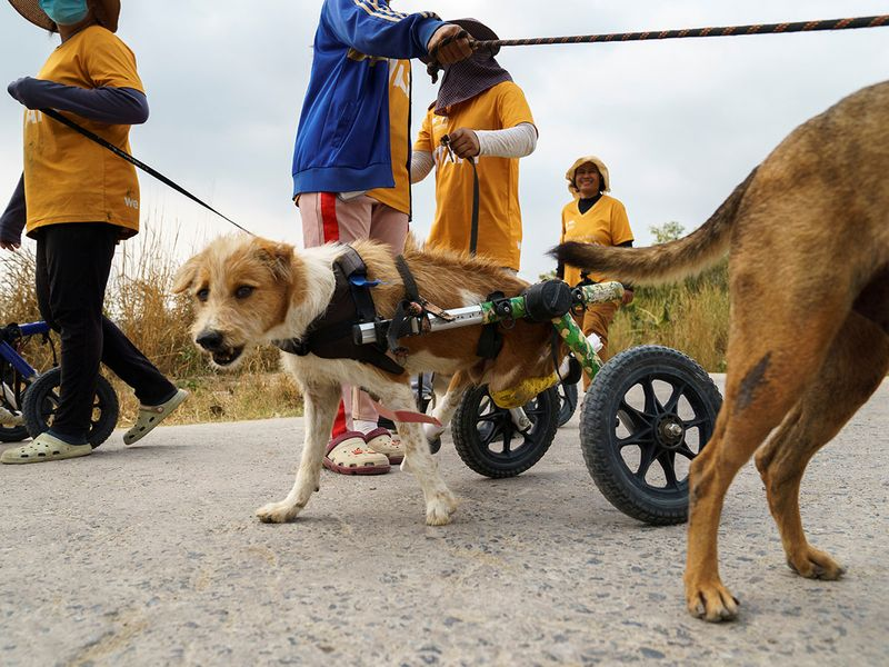 Disabled dogs gallery