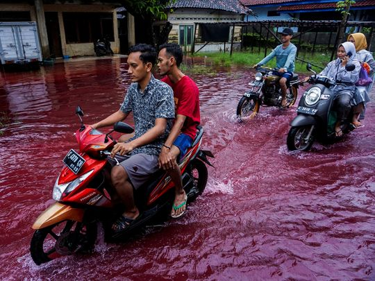 2021-02-06T062923Z_392848417_RC2UML93F8TA_RTRMADP_3_INDONESIA-ENVIRONMENT-(Read-Only)