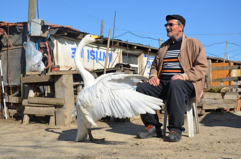 Copy of Turkey_Swan_50608.jpg-0b38c-1612798251607