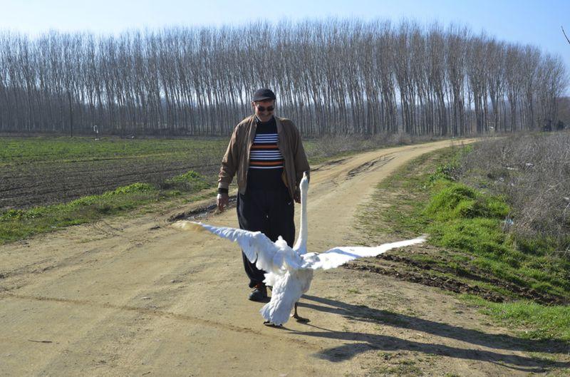 Copy of Turkey_Swan_68597.jpg-5e7eb-1612798280408