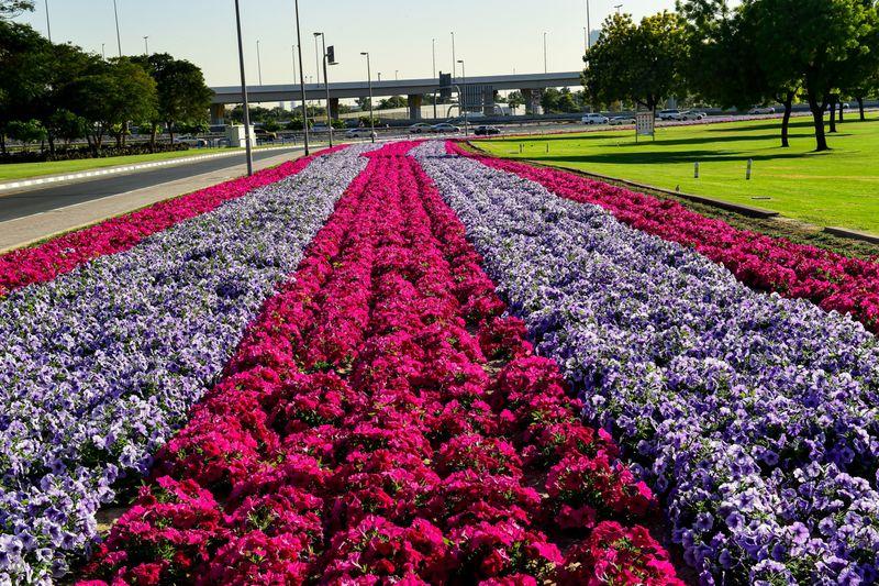 FLOWER 14-1613043548346