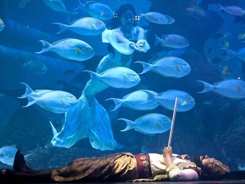 Underwater dragon show gallery