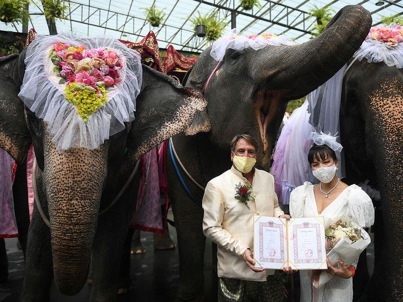 Couples on elephants on Valentine's Day