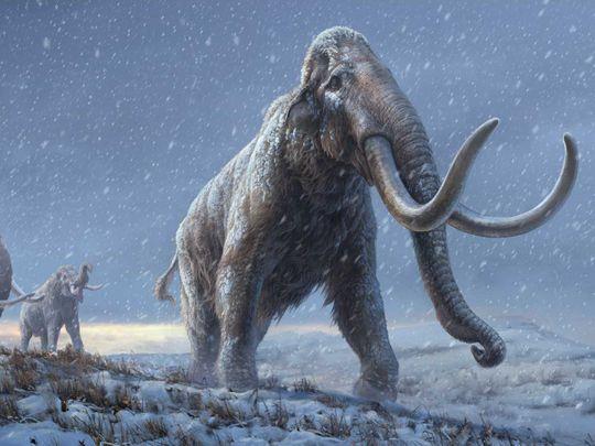 20210218 mammoth