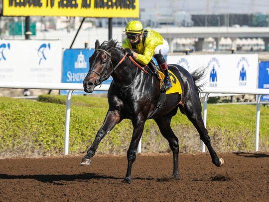 Horseracing - Shamikh