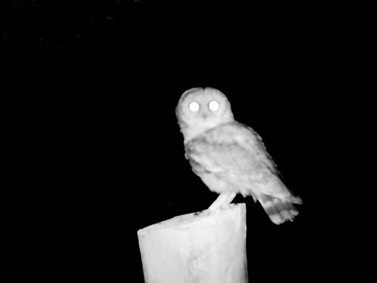 REG 210222 Omani Owl 1-1614142421682