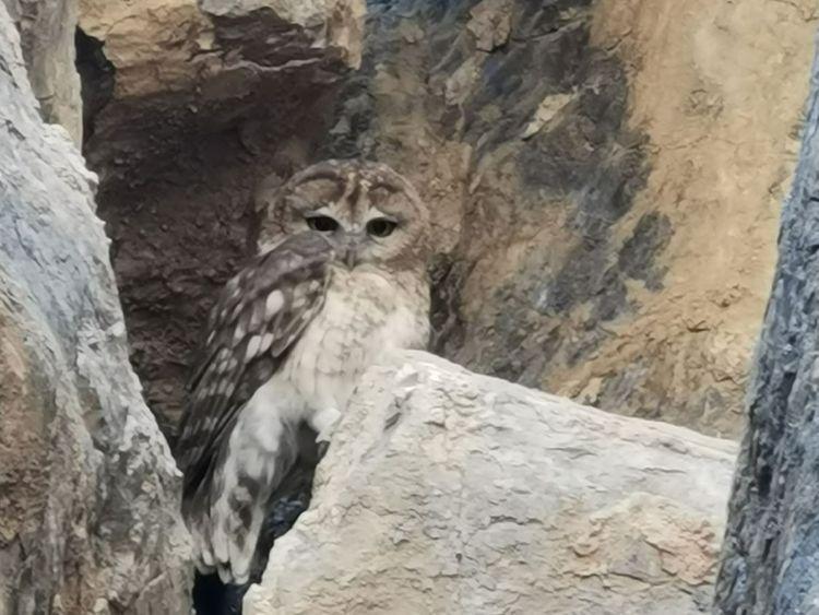 REG 210222 Omani Owl-1614142420065