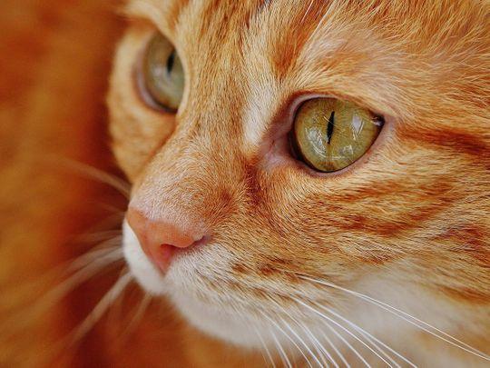 kitten, generic