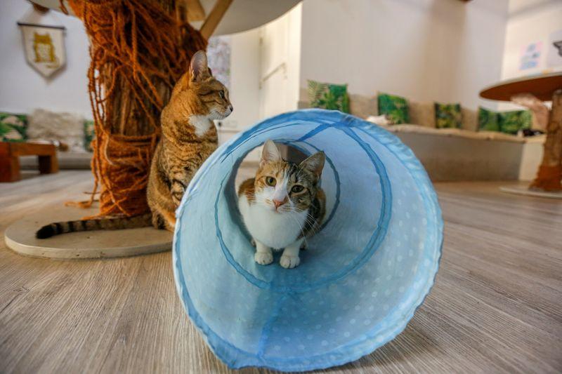 CAT 3-1614513220217