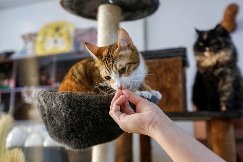 CAT 4-1614513216389