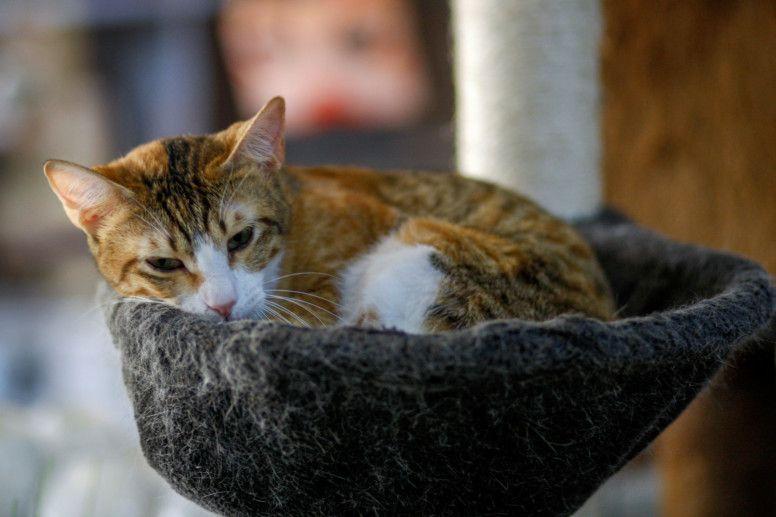 CAT 8-1614513204324