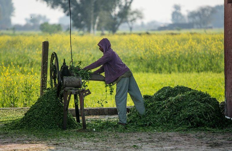 A farm in Pakistan