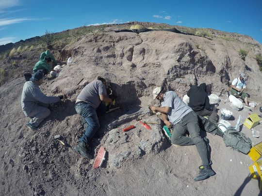 Palaeontologists excavate of dinosaur bones that belonged to a titanosaur in Neuquen province, Argentina.