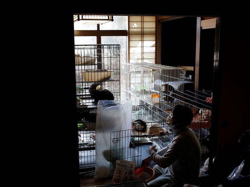 Fukushima cats gallery