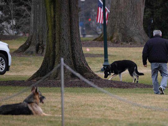 Biden dogs Champ Major