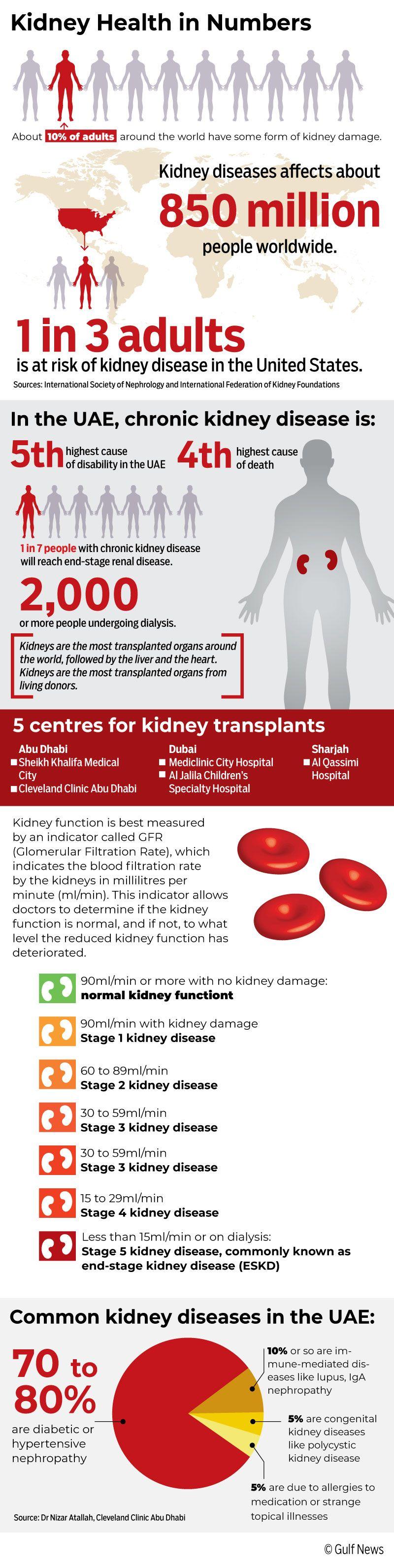 Kidney Graphic correct