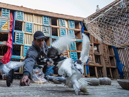 REG 210310 pigeons-1615368713978
