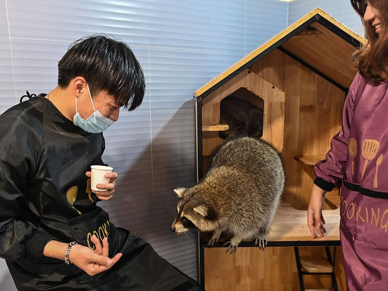 Animal cafe gallery