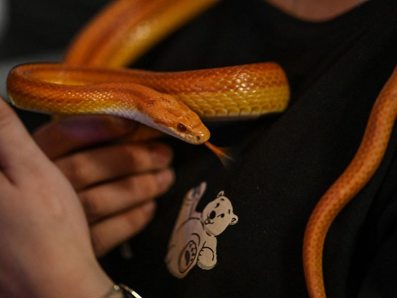 Raccoons to snakes: Shanghai animal cafes expand to exotics | News-photos – Gulf News