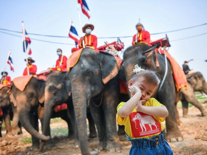 2021-03-13T043535Z_458705182_RC24AM91QGE4_RTRMADP_3_THAILAND-ELEPHANTS