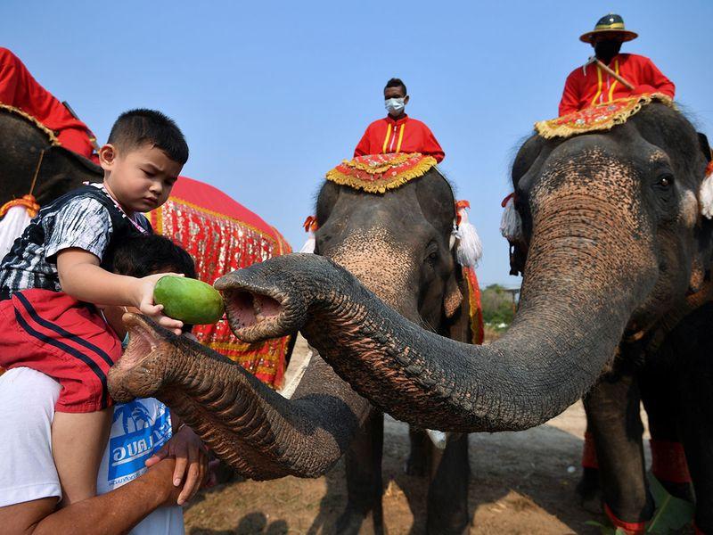2021-03-13T044409Z_1983165572_RC24AM96KH9V_RTRMADP_3_THAILAND-ELEPHANTS