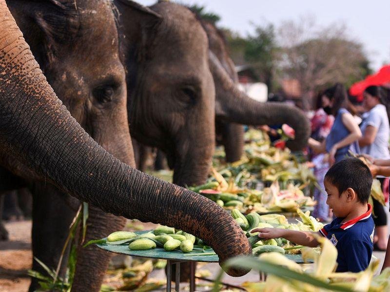 2021-03-13T055219Z_1471624033_RC25AM9W2FG2_RTRMADP_3_THAILAND-ELEPHANTS