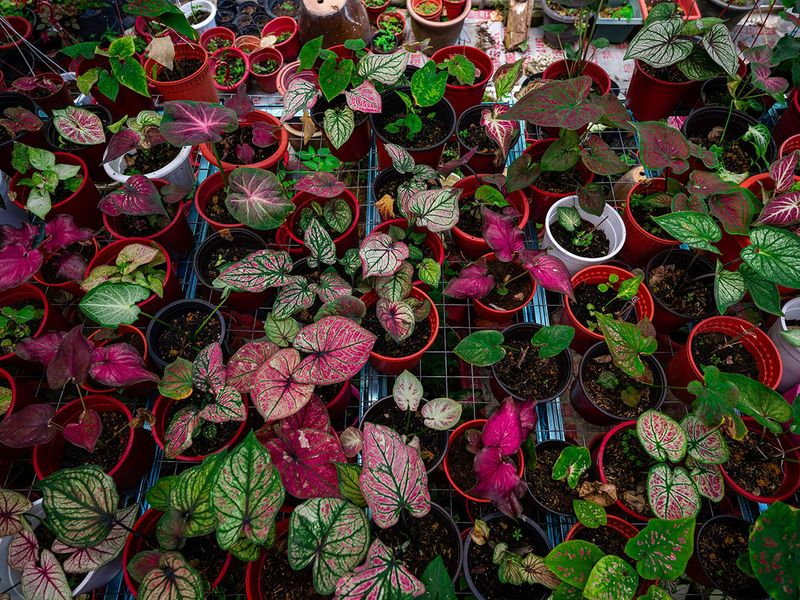 Potted plants gallery