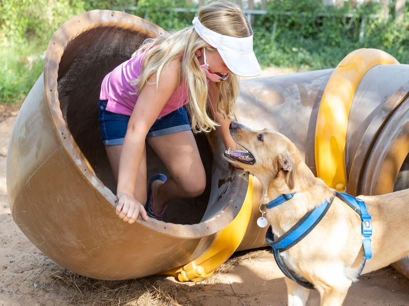 Animal Welfare Pop-Up market