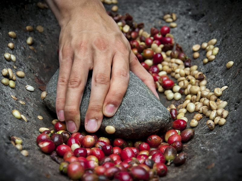 Coffee beans with fruits skin