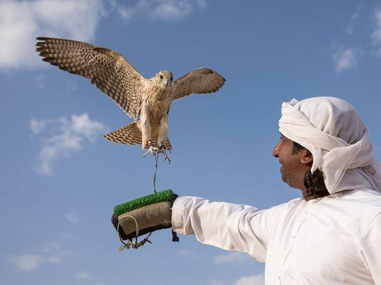 Photos: Falconry in Abu Dhabi's Al Dhafra desert