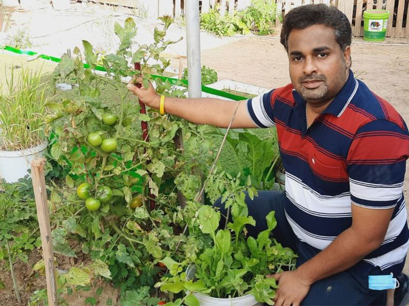 Indian expatriate Abhilas Odattil Vijayraghavan has been growing vegetables in small farms for the past 10 years.