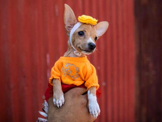 Dogs dress up to receive St Lazarus blessings in Nicaragua