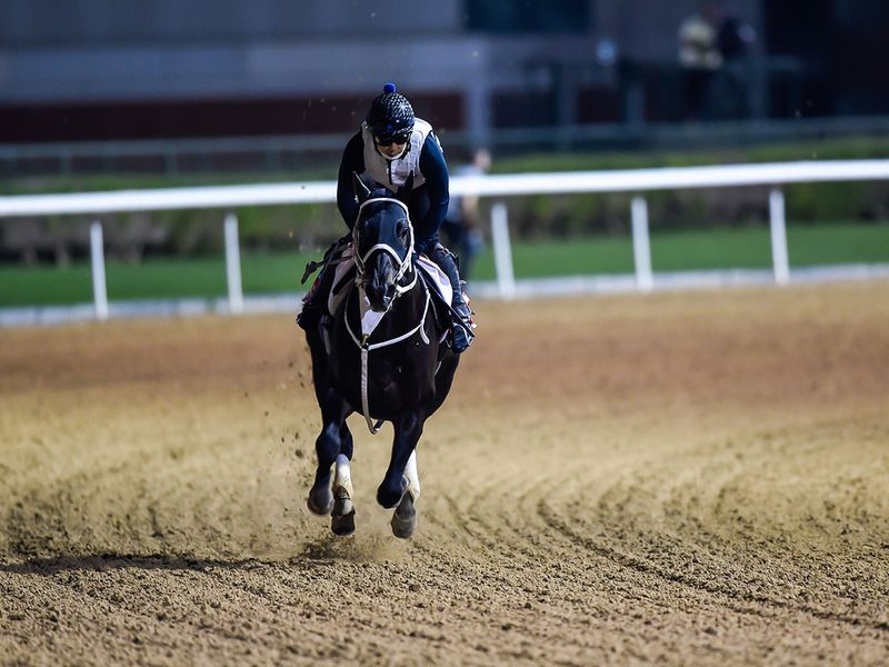 Chuwa Wizard stretched his legs ahead of the Dubai World Cup