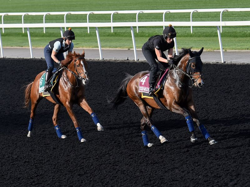 Horses work out on the track on Monday morning