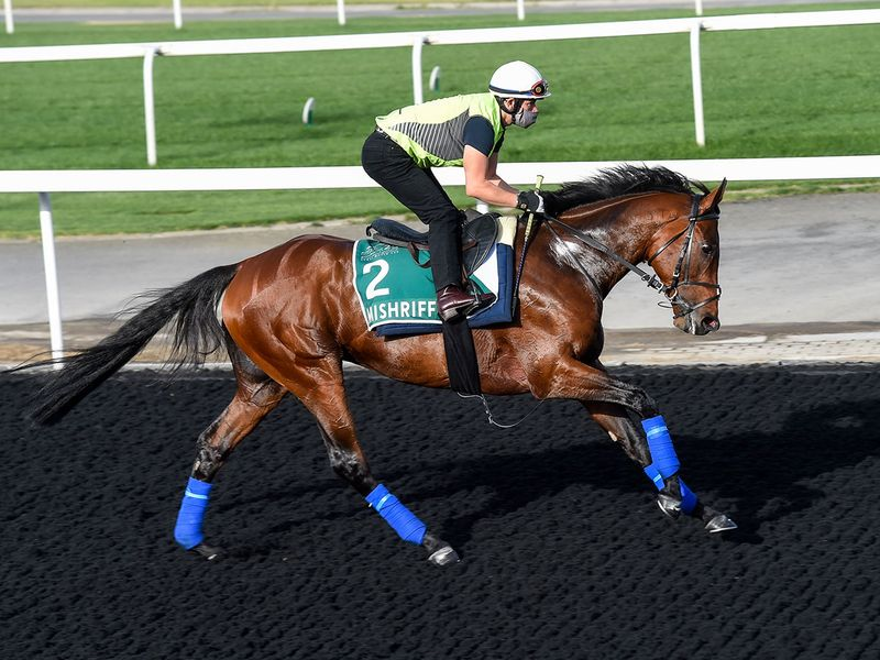 Mishriff, last month's Saudi Cup winner and Sheema Classic contender, was out fr a run at Meydan