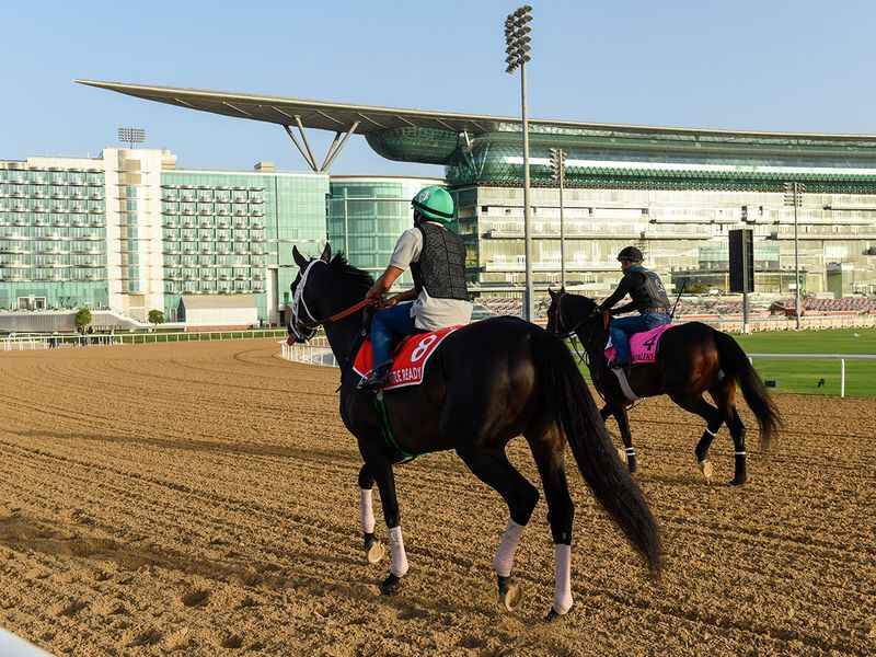 While not everyone can be a winner, there will surely be some tight contests on Saturday on Dubai World Cup Night