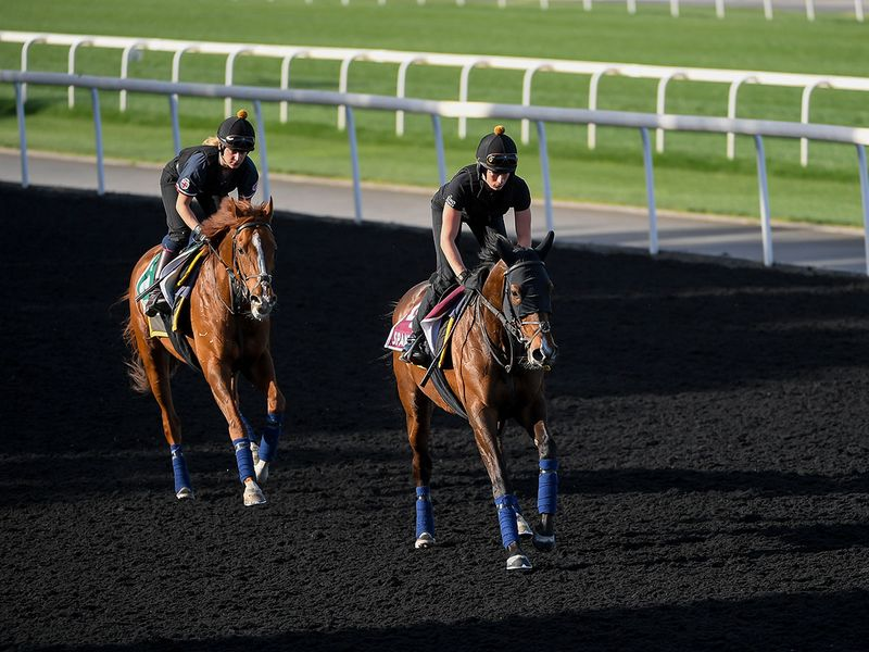 It was a busy day at Meydan as horses mast the most of their time on the track