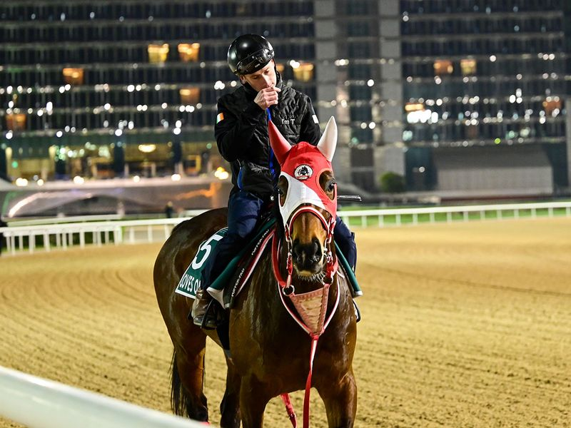 Loves Only You was up early to get to work at Meydan