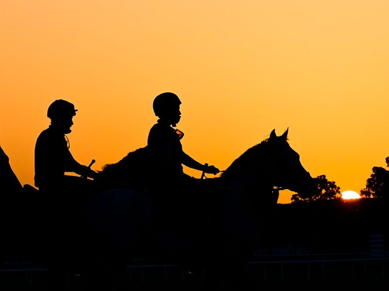 Riders and horses trot out at sunrise for trackwork at Meydan ahead of the Dubai World Cup