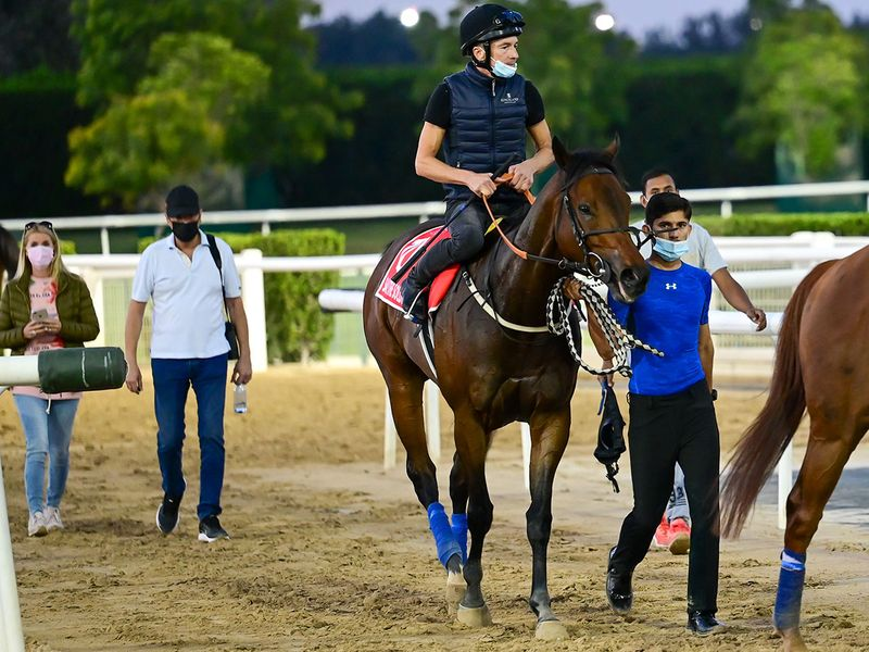 Salute The Soldier during trackwork at Meydan ahead of the Dubai World Cup