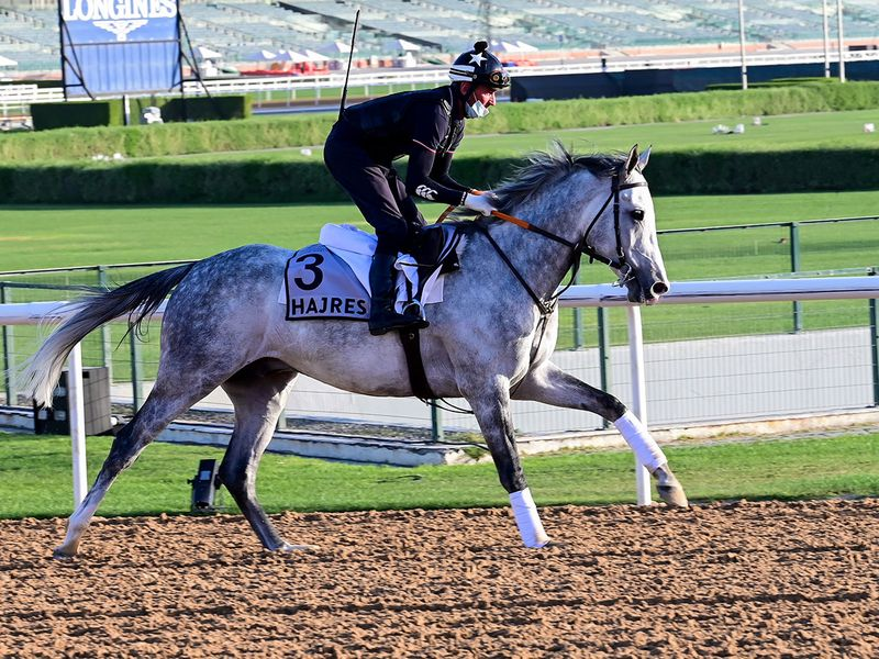 The purebreds were also out as Hajres prepped for the Kahayla Classic
