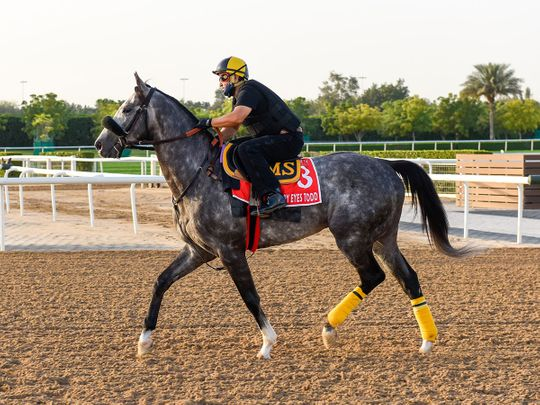 Sleepy Eyes Todd looked to be in fine form at MAydan ahead of the Dubai World Cup