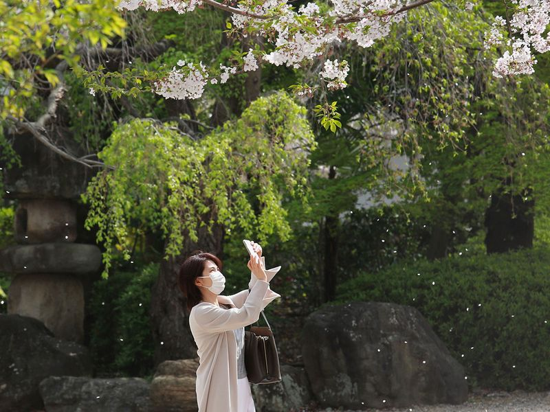 A woman wearing face masks to protect against the spread of the coronavirus takes a photo of cherry blossoms in Tokyo, Tuesday, March 30, 2021.