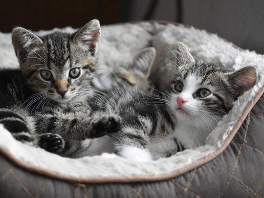 STOCK kittens