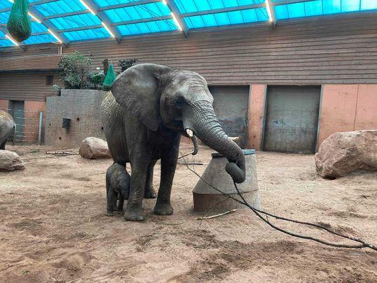 ELEPHANT SWEDEN