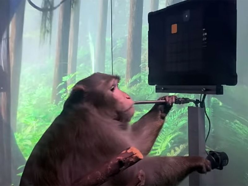 Video: Elon Musk's Neuralink shows monkey with brain-chip playing videogame by thinking